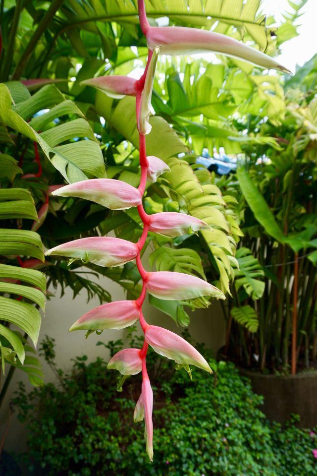 Blumen in Malaysia