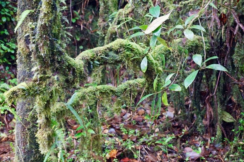 Regenwald in Malaysia