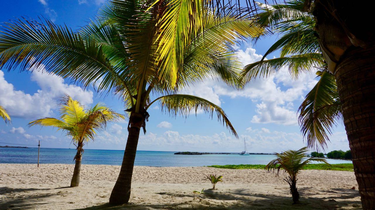 Palmen im Januar