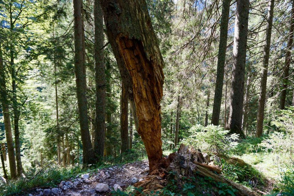Der Wald hat hier seine ganz natürliche Entwicklung