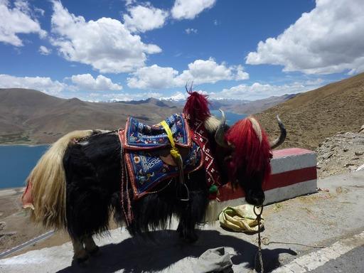 12_2010-06_tibet_0186.JPG