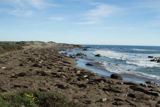 2015-02-11_usa-hwy1-california_elephant-seals.jpg