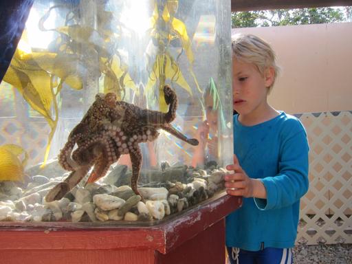 2015-04-05_usa-california_octopus.jpg