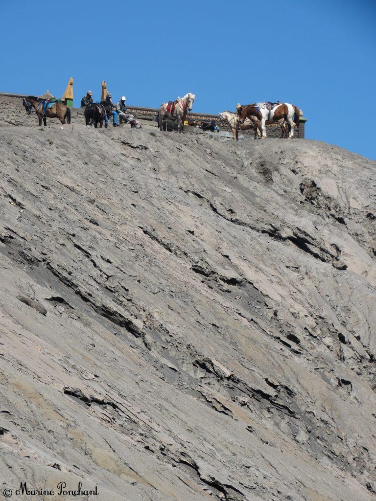 Chevaux attendant en haut du cratère