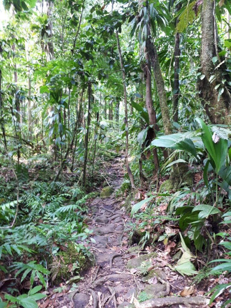 chemin escarpé forêt