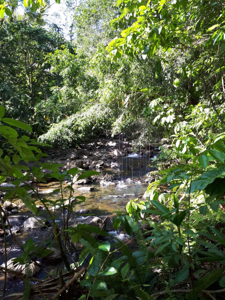 liane dans la forêt