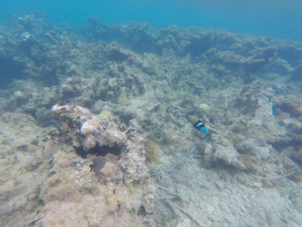 Snorkeling plage terre de haut