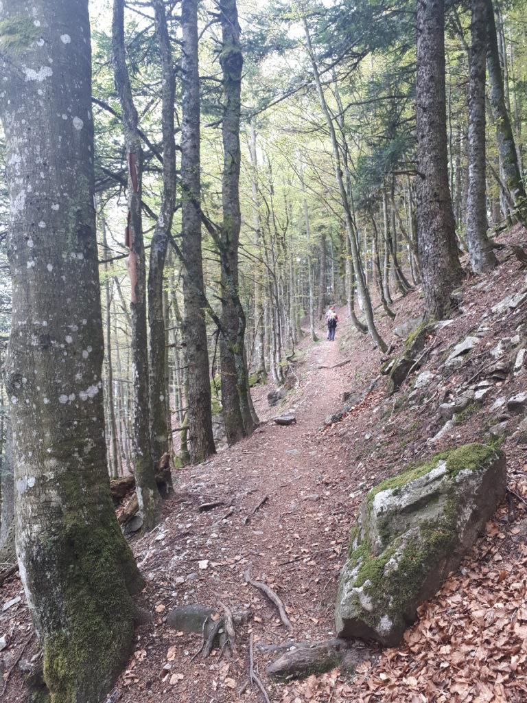 Sentier sur les pistes de ski alpin des Vosges