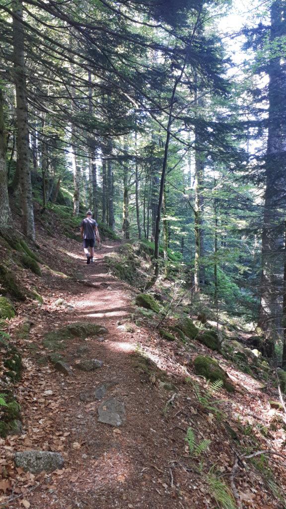 sentier escarpé forêt