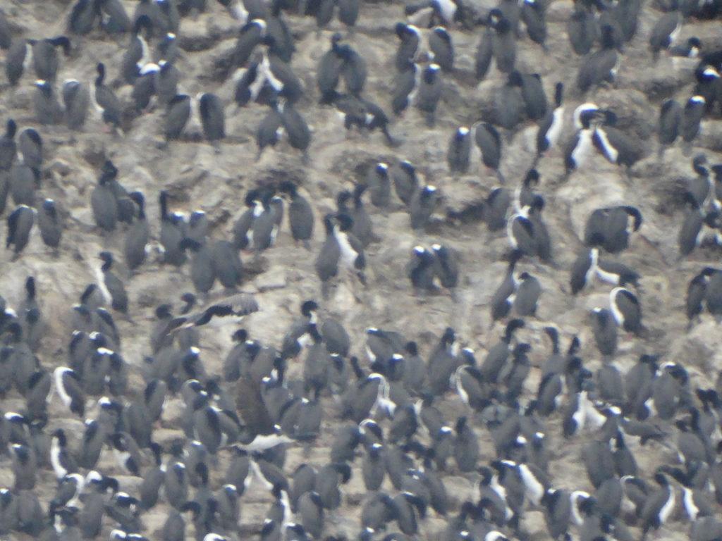 presque 20 oiseaux au m²
