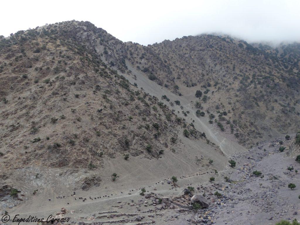 Chèvres des montagnes Toubkal