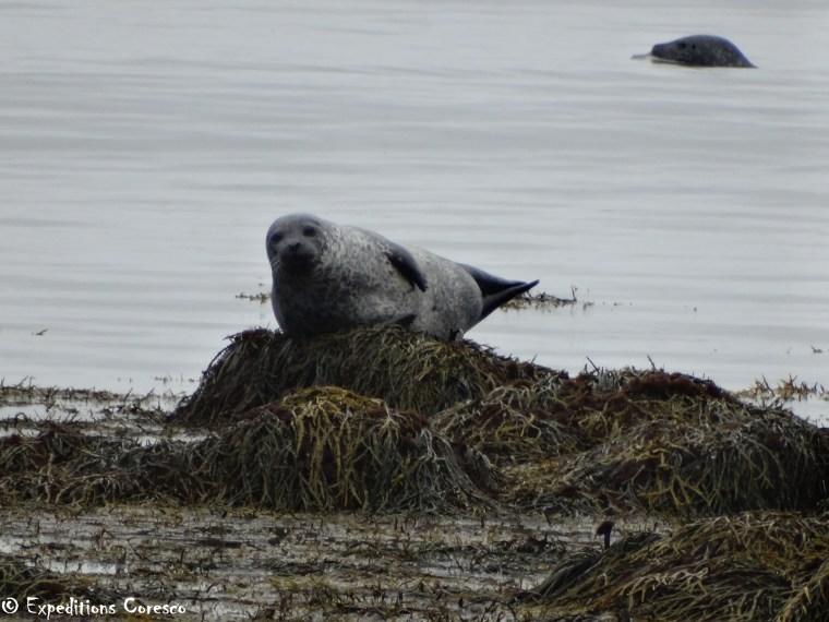 Les animaux marins de la province de Snaefellsnes