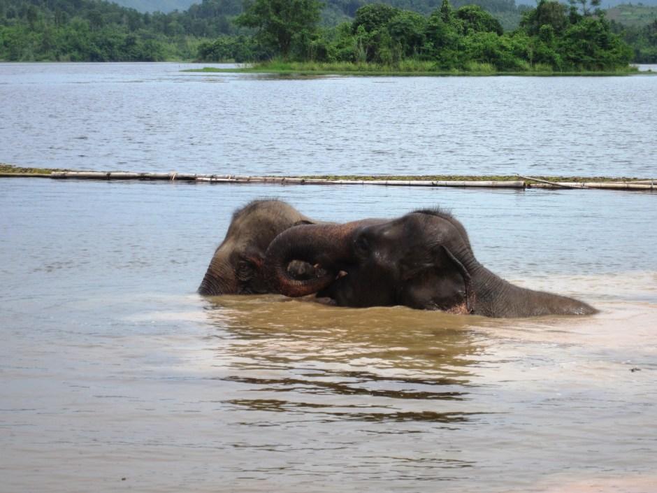 Two elephants taking their morning bath.