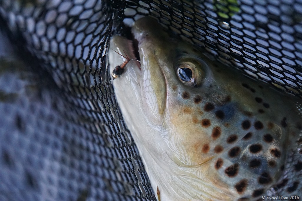Retrospection on the Trout Season 2016 in Switzerland