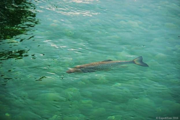 Fly-Fishing-the-Canton-of-Schwyz1.jpg