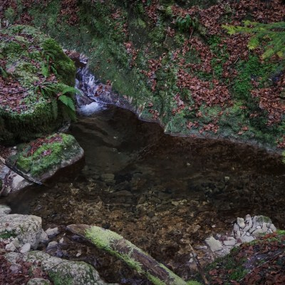 One of the few promising looking pools found while exploring the headwaters of the tiny mountain stream