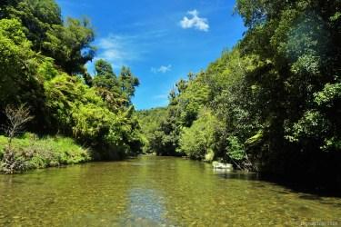 Lush green vegetation in New Zealand