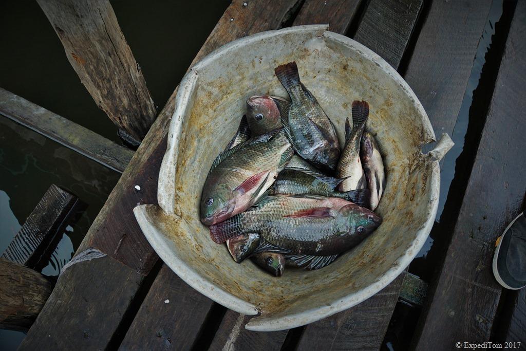 Fly Fishing at Inle Lake Myanmar (6)