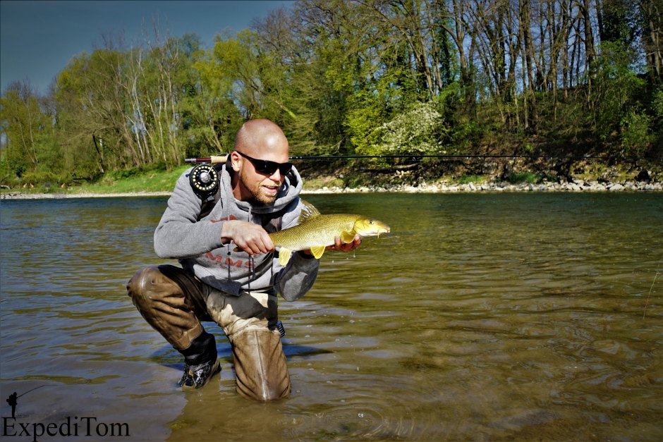 Fly fishing for barbel in a larger river of Switzerland