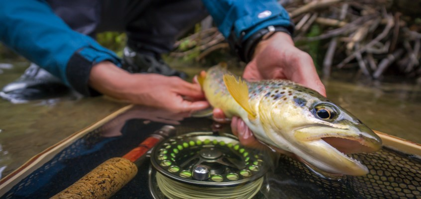 Small Stream Fly Fishing with Robin Melliger
