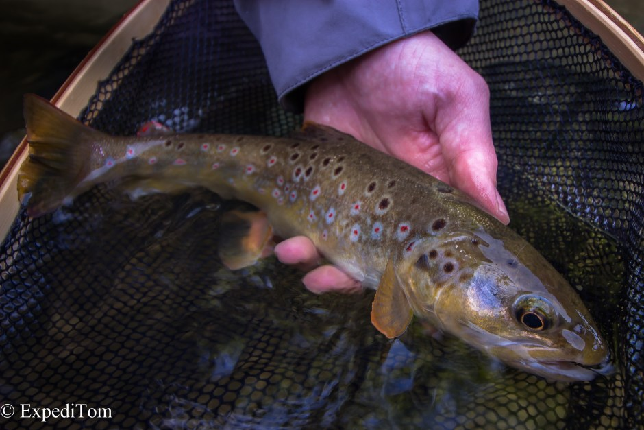 Gorgeous trout caught already on a previous fly fishing trip