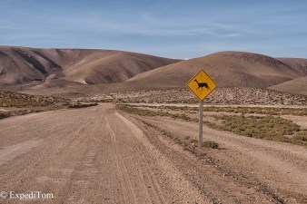 Pay attention to Guanacos