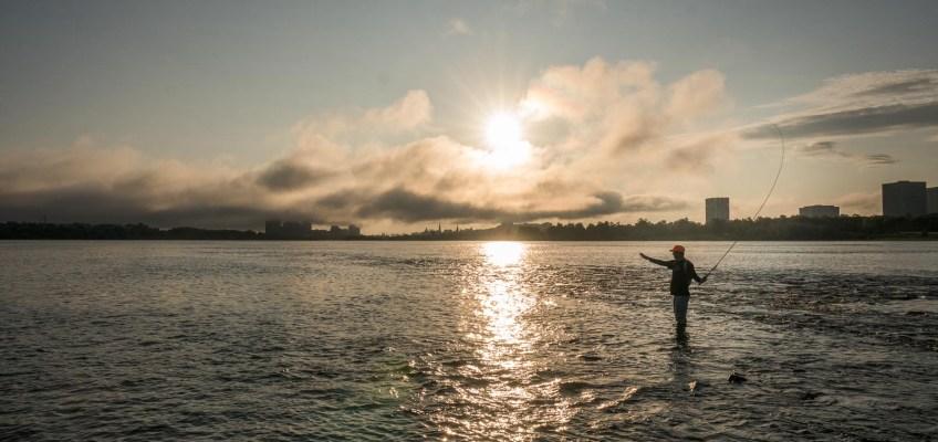 Bass Fly Fishing in Ottawa Canada (4)