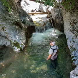 A Special Day: Fly Fishing Bernese Mountain Creeks