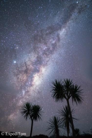 Milky Way behind Cabage trees