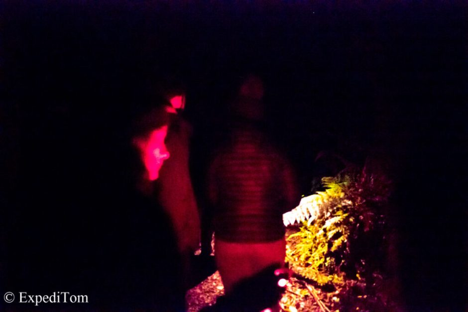 Kiwi spotting in the dark with red torches