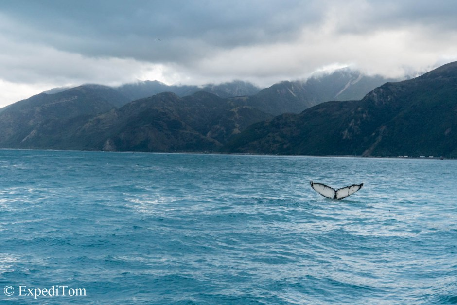 Humpback whale fin in front of Kaikoura range
