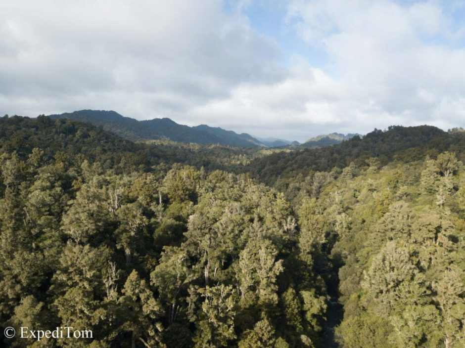 Forest South East of Rotorua supposed to be a bad neighbourhood