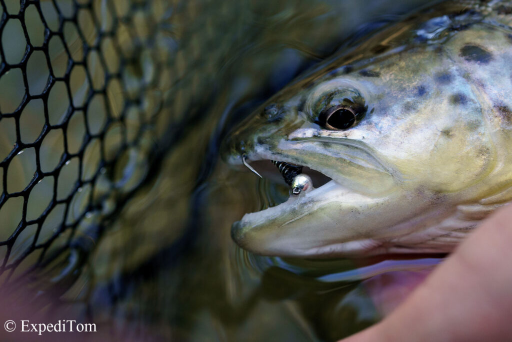 A well-presented Black widow did the trick on this brown trout as well as the brookie