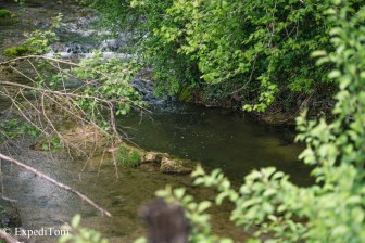 Small creek fly fishing