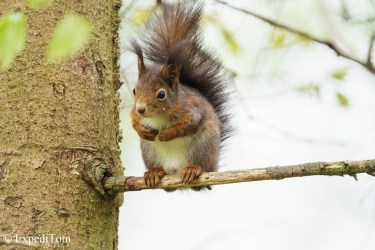 Caught in the act - Squirrel