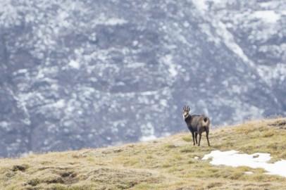 ExpediTom Swiss National Park Wildlife 019