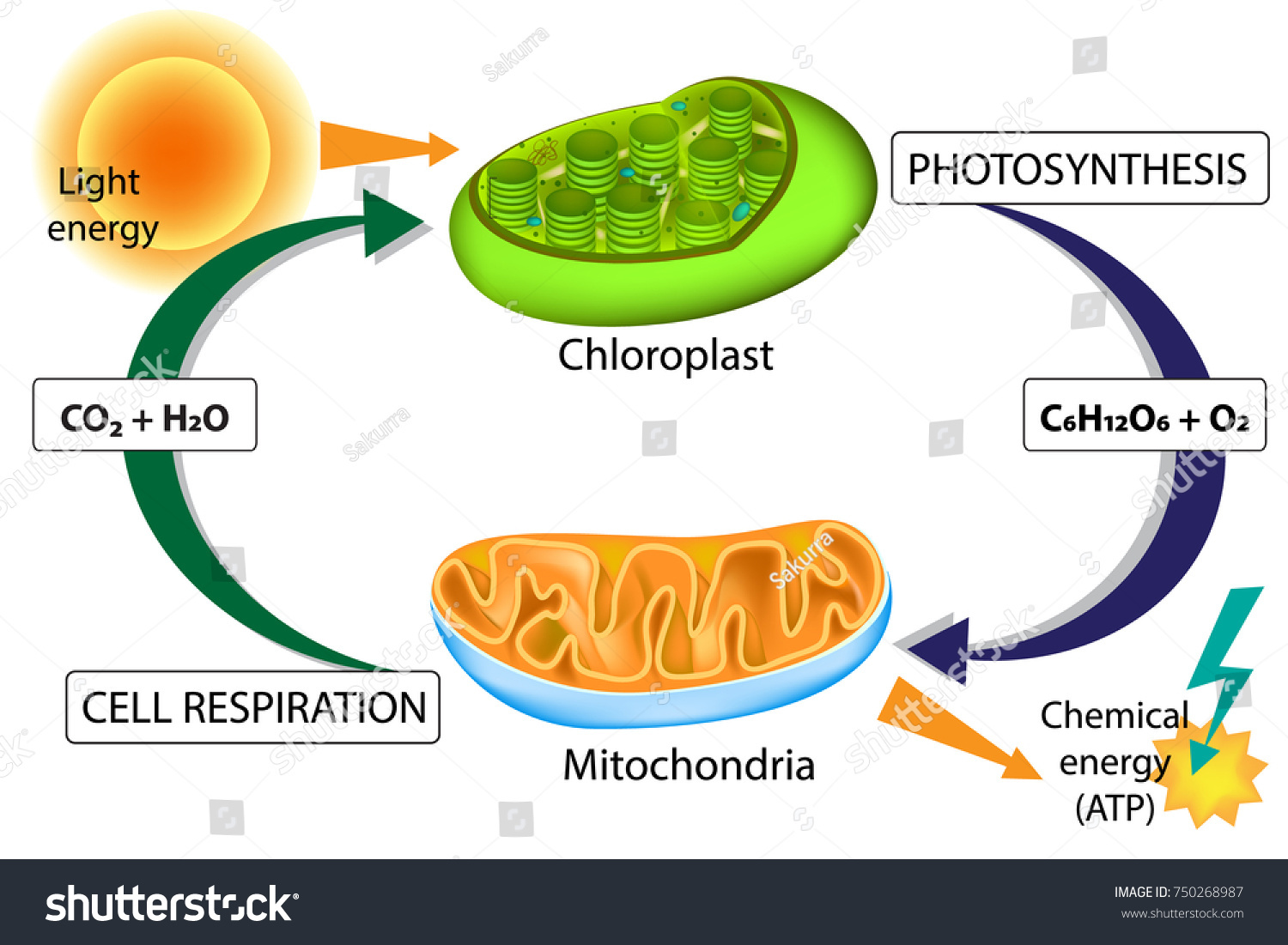 Photosynthesis And Respiration Experibox