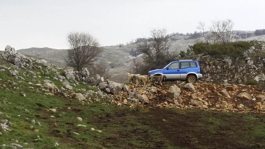 jeep_kuratica