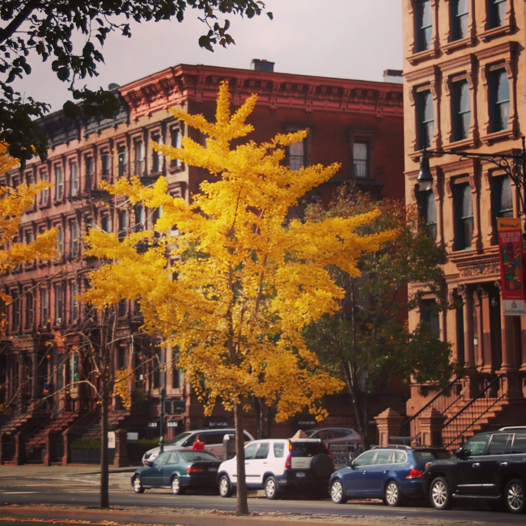 harlem-montmorris-brownstones