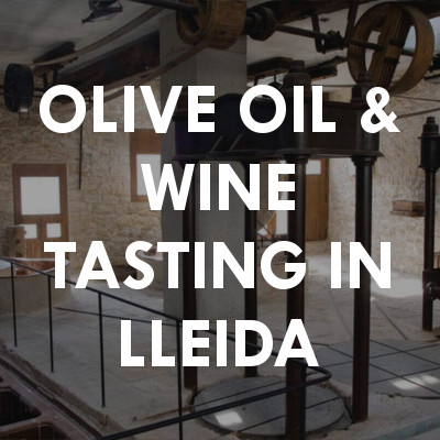 Olive oil & wine tasting in Lleida