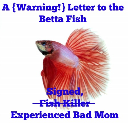 bettafishletter