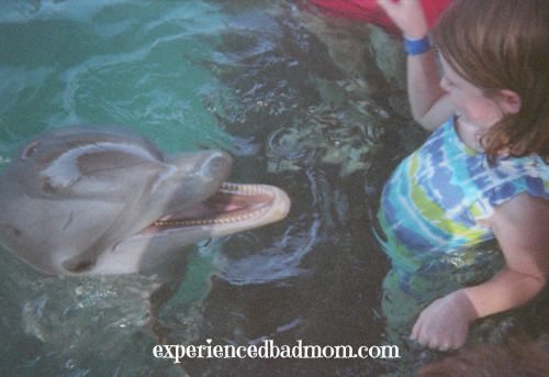 Meeting dolphins is one of the pricey, but amazing, port excursions you and your family can enjoy on a Disney Cruise!