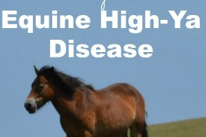 Here's the sobering {and funny!} truth about Equine High-Ya Disease. You gotta read it to believe it!