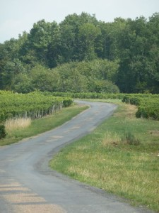 Cycle path through the Vouvray vineyards on the north side of the Loire