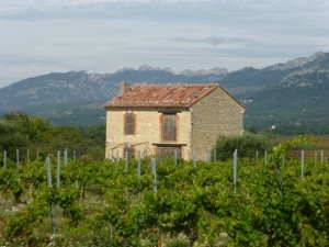 Vineyards and the Dentelles de Montmirail