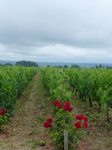 Miles of vineyards for exploring by bike