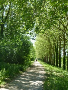 Quiet car-free bike paths are perfect for all levels of cyclists