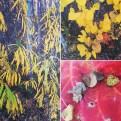 Colour portfolio