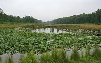 Brick Pond 2