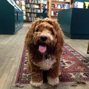 riverow-bookshop-3